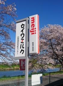 白岡蓮田センターの桜